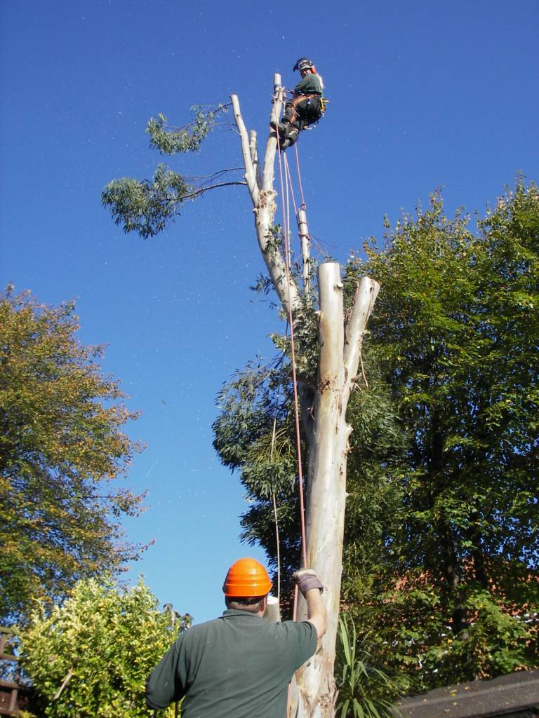 Regular Tree Surgery Team Available