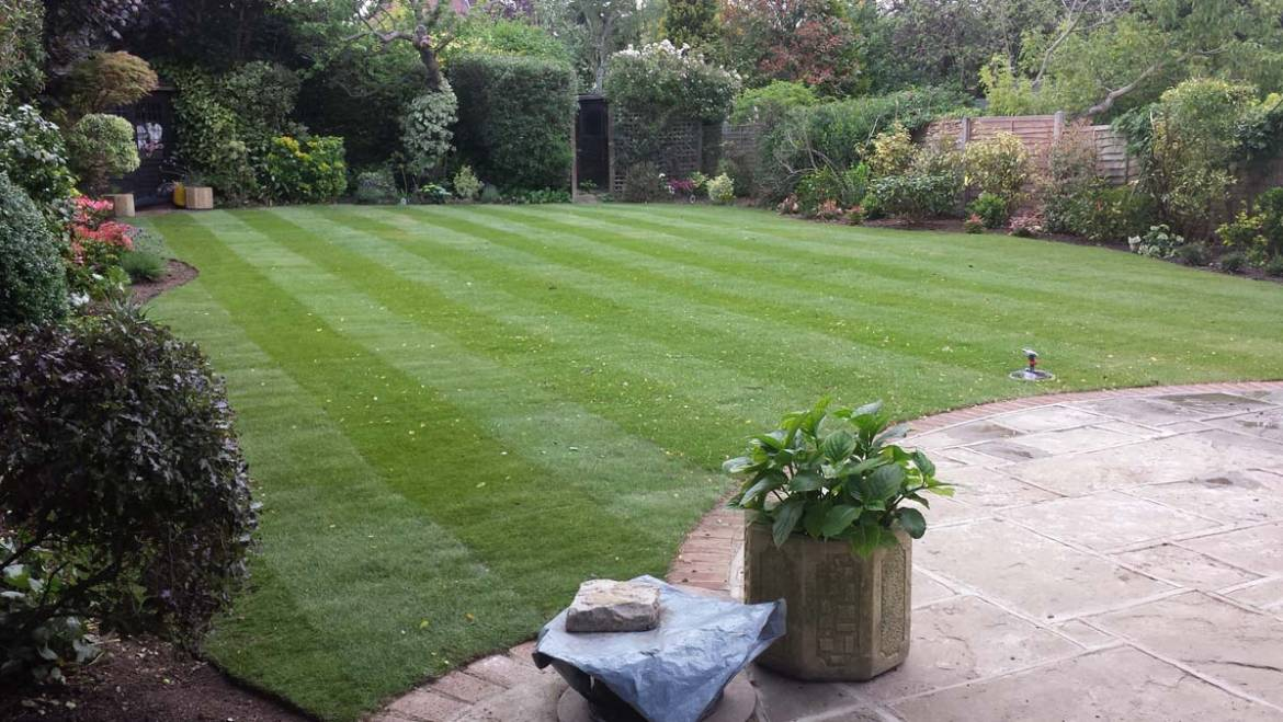 Big Lawn and Planting