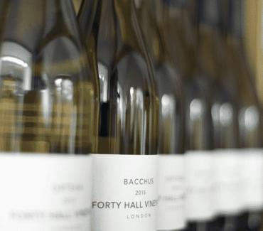 Harvest Time – Local Wine