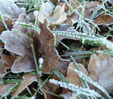 November Gardening Tips…