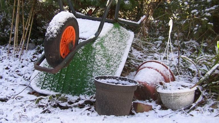 February Gardening Tips