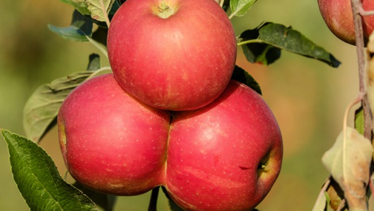 September Gardening Tips…..