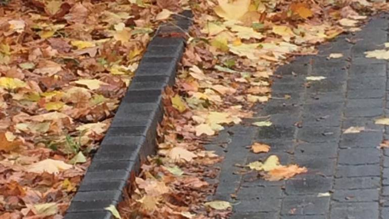Autumn is upon us….