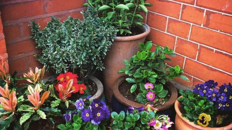 Spring Plants…